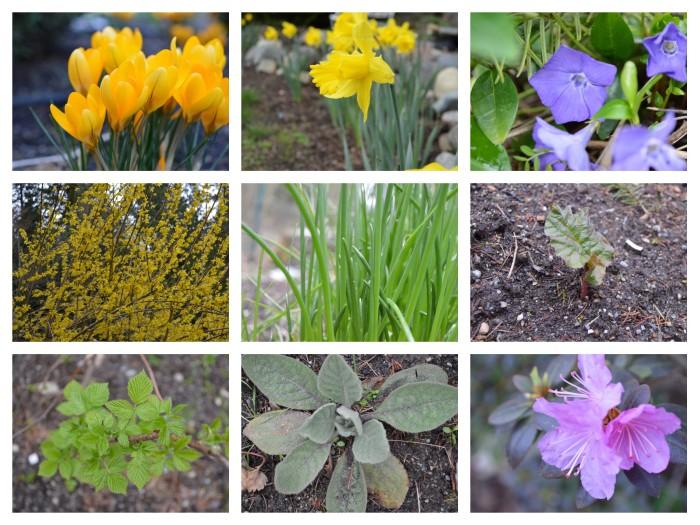 Spring photos