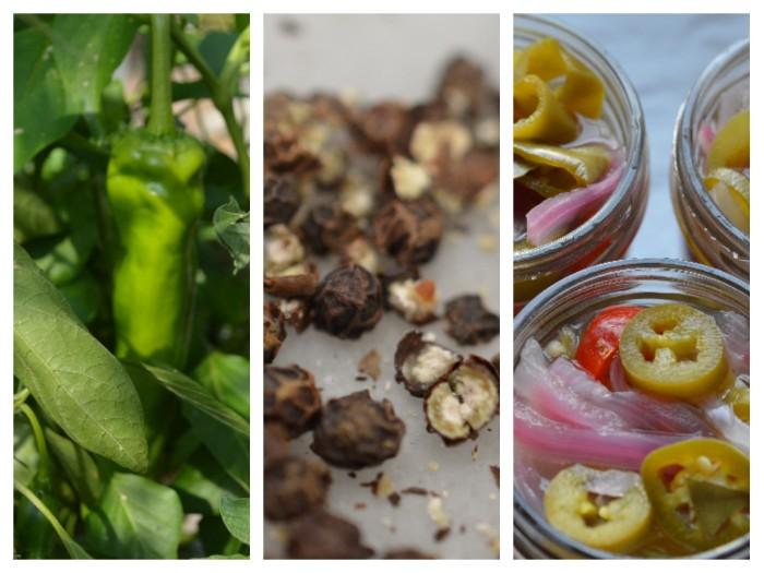 Pickled Jalapenos